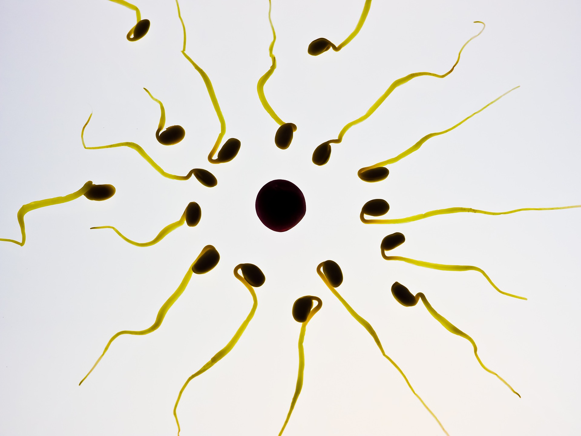 Worldwide: Sperm Counts Down